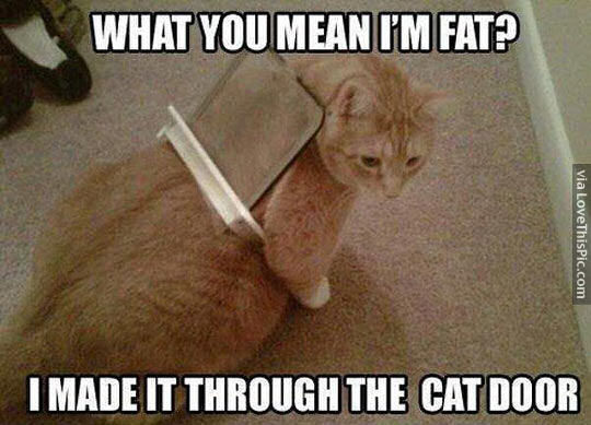 193353-What-Do-You-Mean-Im-Fat-